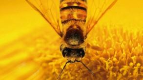 A méhek világa