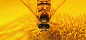 A méhek világa, kedvezménnyel