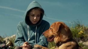 A film egy kislány és egy kutya barátságának történetét meséli el