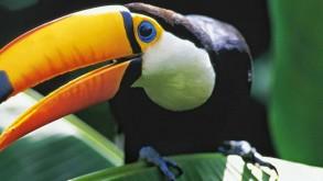 Amazónia 3D