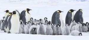 Pingvinek vándorlása 2.